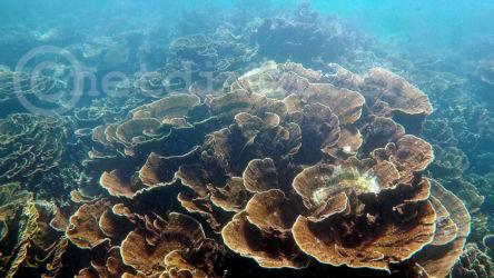 coralBay1