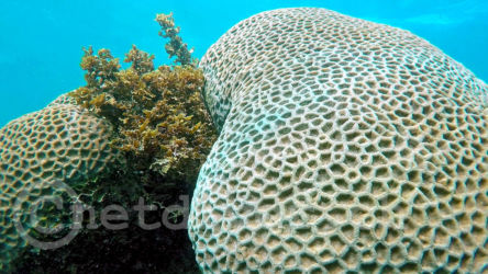 coralBay13